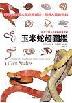 玉米蛇超圖鑑:簡單了解玉米蛇的飼養要訣