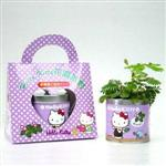 Kitty趣味園藝【含羞草】