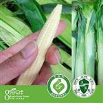 【鮮綠嚴選】終極鮮嫩~水果玉米筍