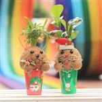 【迎光】幸福耶誕老人&麋鹿苔球二入組合