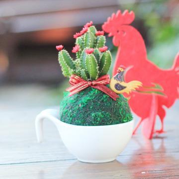 【迎光】好雞會多肉綠苔