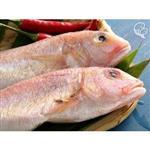 【上野物產】野生金線魚,共15隻(120g~150g/隻)