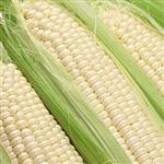 【鮮採家】香Q糯米玉米3台斤1箱(約6-10支)
