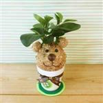 迎光-幸福苔球-熊丸(圓葉椒草)