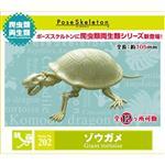 會亂動的化石 象龜 巨龜 擺飾 模型 盒玩 No.202 RE-MENT 骷髏兩棲爬蟲類系列
