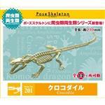 會亂動的化石 鱷魚 擺飾 模型 盒玩 No.201 RE-MENT 骷髏兩棲爬蟲類系列