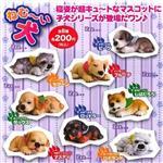 全套8款 瞌睡犬 狗狗 休眠 造型公仔 扭蛋 擺飾 轉蛋