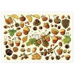 afu尋夢者森林明信片《H01 森林的禮物 》