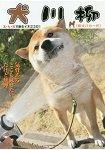 犬川柳-五七五詠嘆犬心-笨柴一代