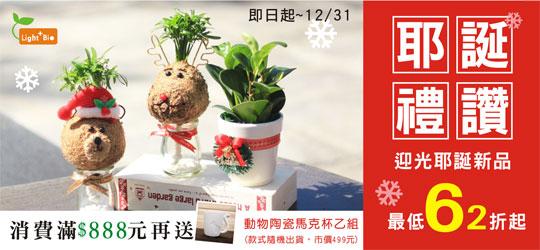 多款耶誕植栽陪你度過耶誕佳節,是您交換禮物的首選~