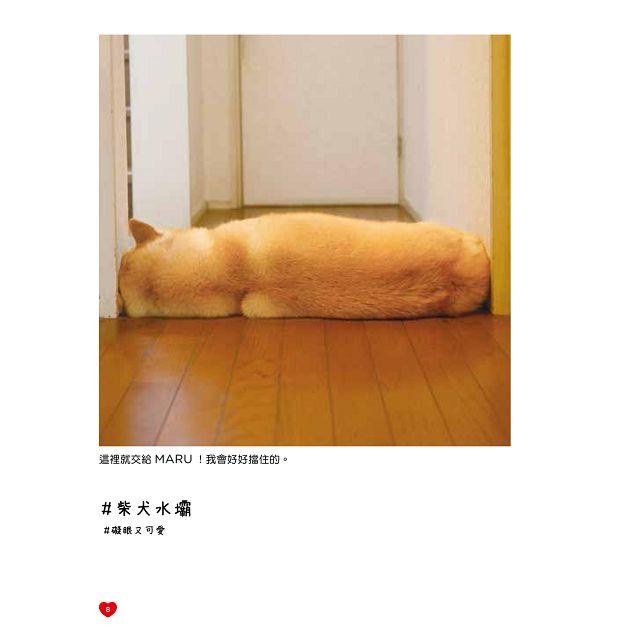 呆萌無敵!柴犬MARU第2彈!!