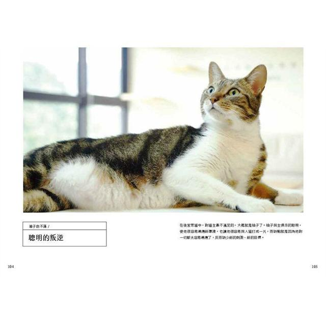 黃阿瑪的後宮生活:貓咪哪有那麼可愛(內附後宮貓咪貼紙乙張-隨機出貨)