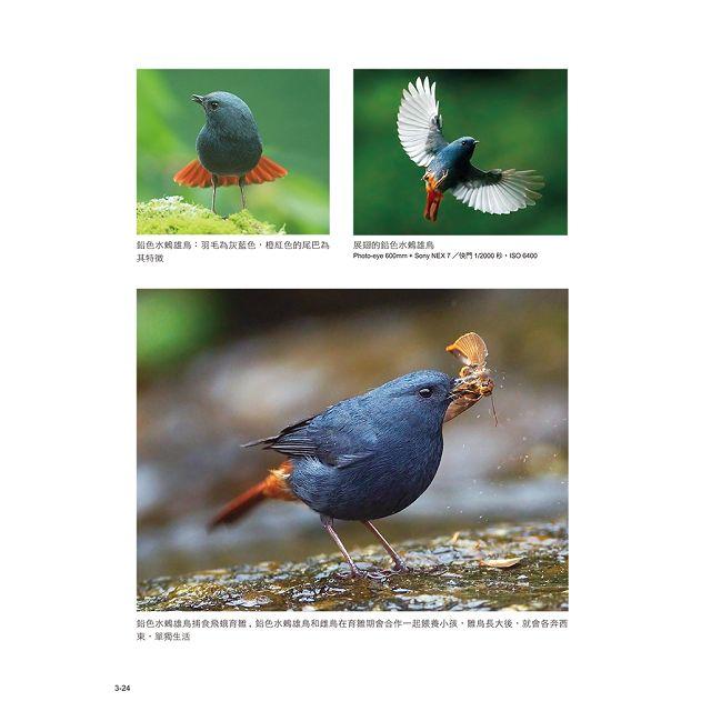 野鳥攝影入門:拍鳥達人帶路