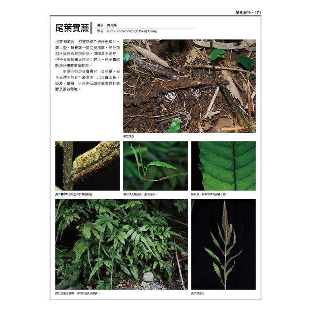 台灣原生植物全圖鑑第八卷(下):蕨類與石松類 蹄蓋蕨科--水龍骨科