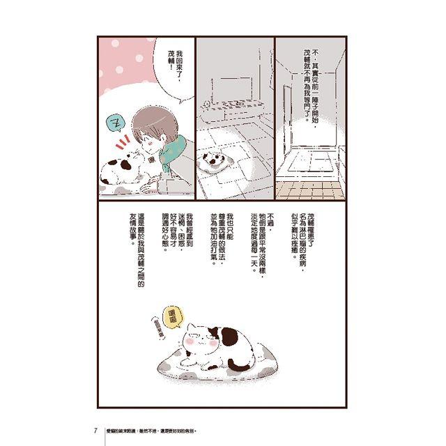 愛貓的終末照護:雖然不捨,還是要好好的告別