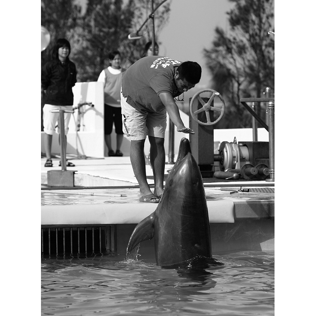 動物物語系列6:失去尾巴的海豚