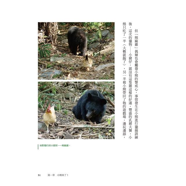小熊回家:南安小熊教我們的事