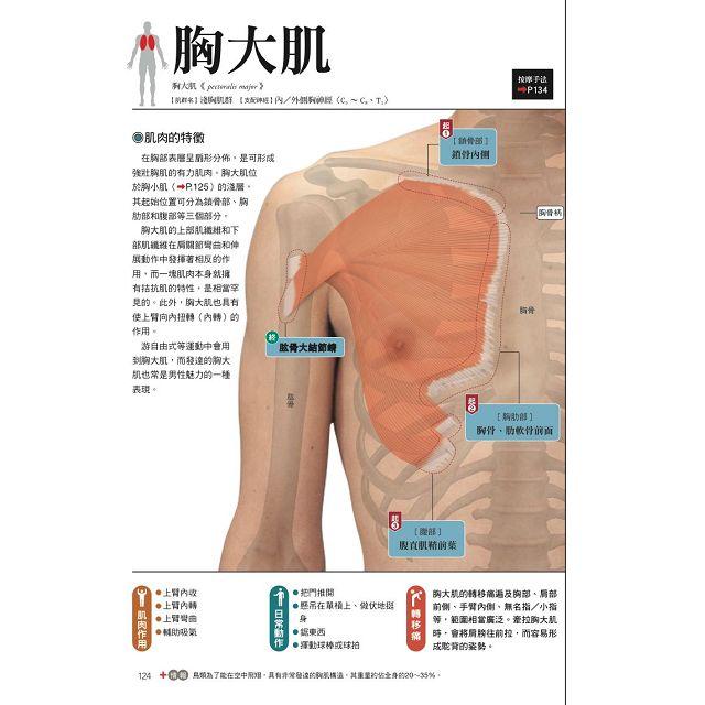 肌肉機能解剖觸診技術 臨床按摩療法