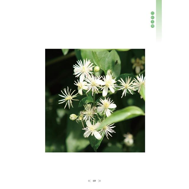 英國巴哈醫生的38種花精療癒:聆聽內心的原聲,啟動與生俱來的情緒智慧