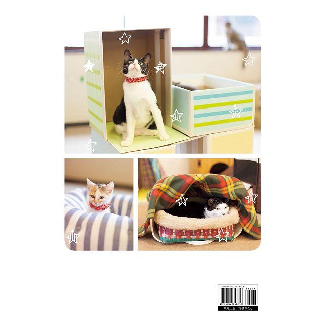 貓奴的手作入門課:用簡易材料打造可愛喵物