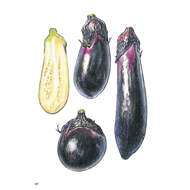 料理的創新與思維套書〔蔬菜〕+〔海鮮〕(套書首刷限定贈品〔插畫年曆明信片組〕)