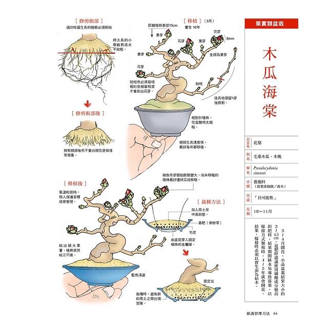 小樹盆栽技法:全彩插畫解說書