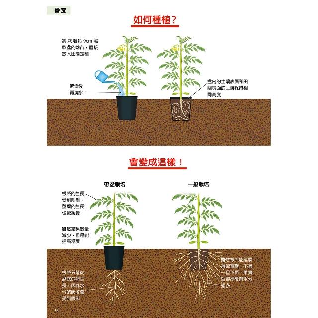 定植與播種豐收密技:掌握成長的重要時期