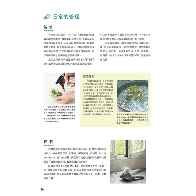 雜貨風綠植家飾:空氣鳳梨栽培圖鑑118