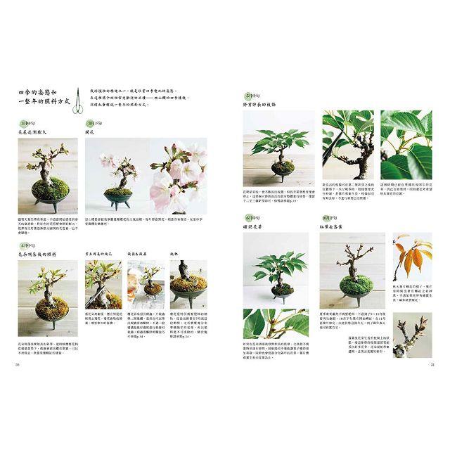 四季都能欣賞的迷你盆栽:捧在手心中的小巧自然景觀