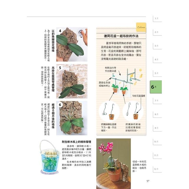 全年度蝴蝶蘭栽培基礎書