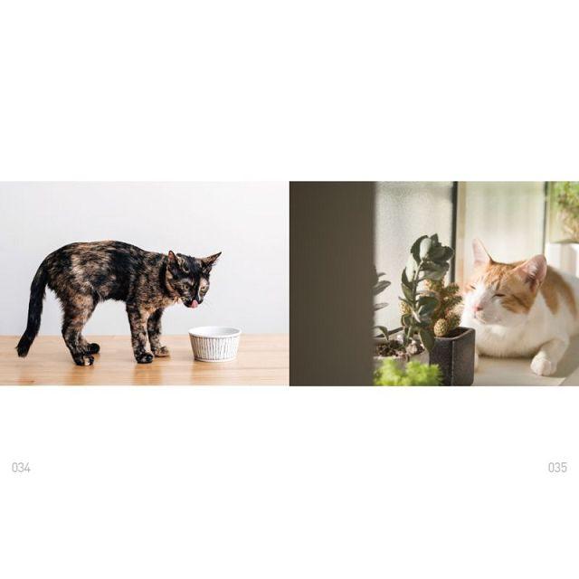 與貓的好味時光:第一本貓與貓奴的鮮食共享料理,從做點心開始,享受你與貓的約會
