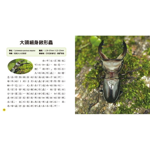 兒童百科:霸王甲蟲小百科(典藏版)