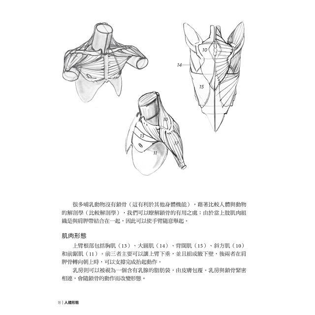 人體形態:巴黎美術學院教授教你如何畫出生動人體素描