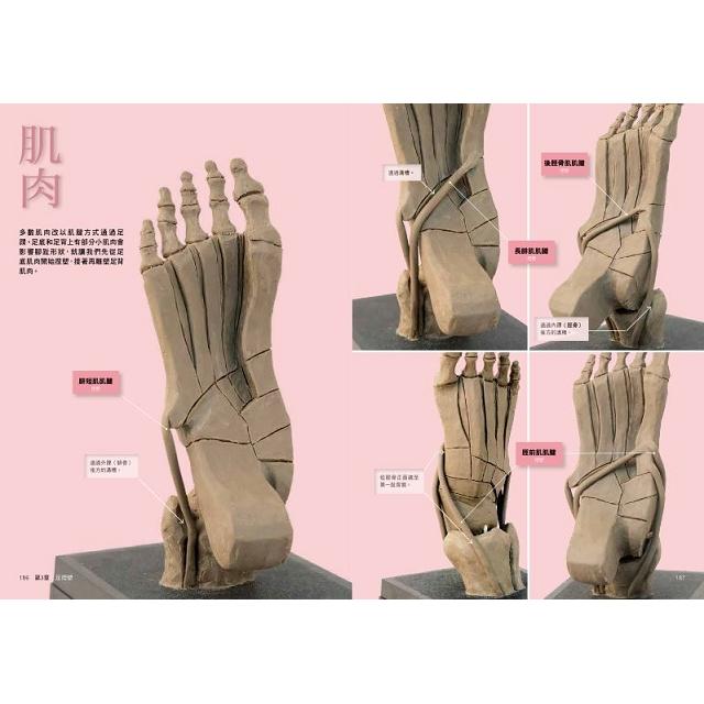 用立體模型深入理解美術解剖學