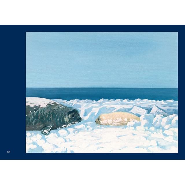 我們共同的世界:守護小海豹