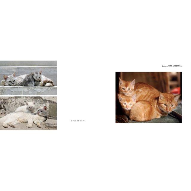 當世界只剩下貓珍藏版(初回特典盒裝組 )