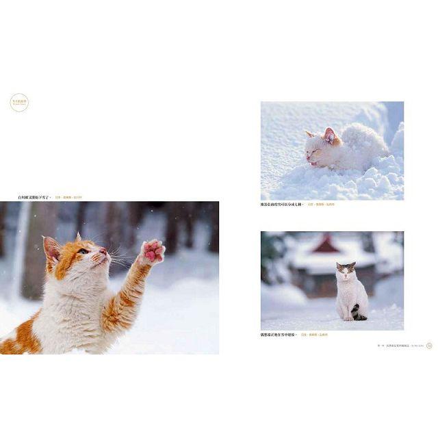 岩合光昭 貓