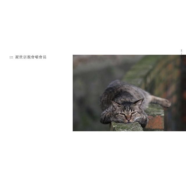 身為職業拍貓人:不論如何,拍貓人生還是少了許多煩惱