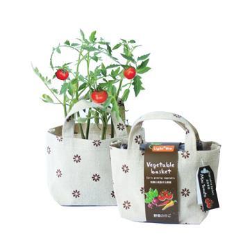 【迎光】Vegetable basket小植栽-迷你番茄