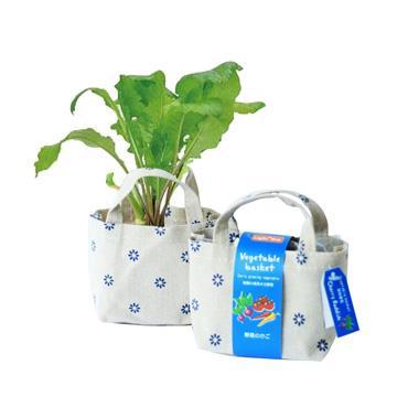 【迎光】Vegetable basket小植栽-櫻桃蘿蔔