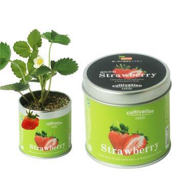 【迎光】Cultivation Table栽培罐-迷你草莓