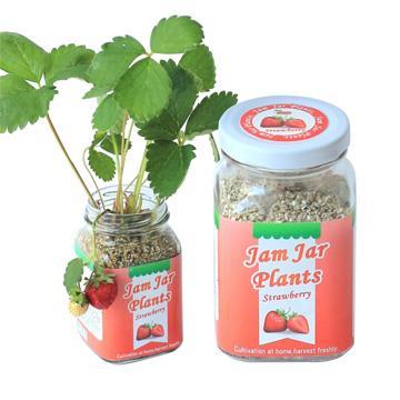 【迎光】Jam Jar Plants小植栽-迷你草莓