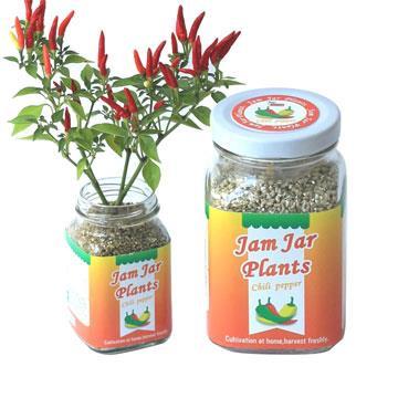 【迎光】Jam Jar Plants小植栽-五彩辣椒