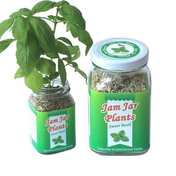 【迎光】Jam Jar Plants小植栽-甜羅勒