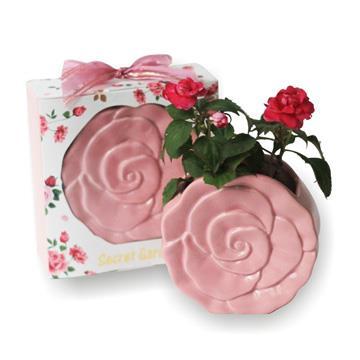 【迎光】Secret Garden秘密花園小植栽-粉色