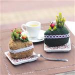 【迎光】甜心蛋糕多肉植栽二入組合