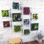 3D立體仿真多肉植物人造草盆栽牆飾掛飾/相框壁飾/壁掛