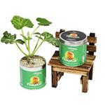 【迎光】Cultivation Table栽培罐-玩具南瓜