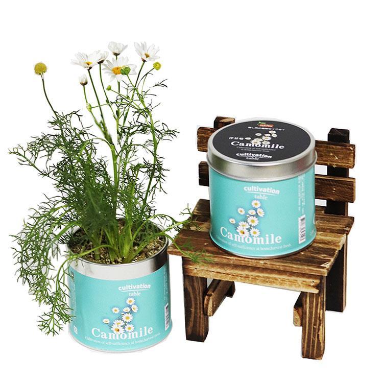 【迎光】Cultivation Table栽培罐-洋甘菊