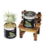 【迎光】Cultivation Table栽培罐-黑松
